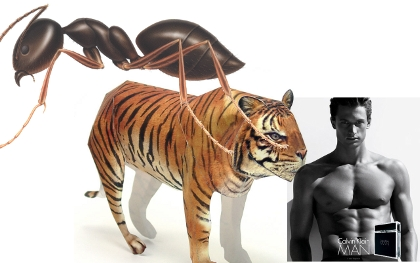 ant tiger man